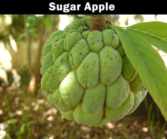 Bonjour Mes Amis 12 Terrific Fruits You May Have Never Tasted