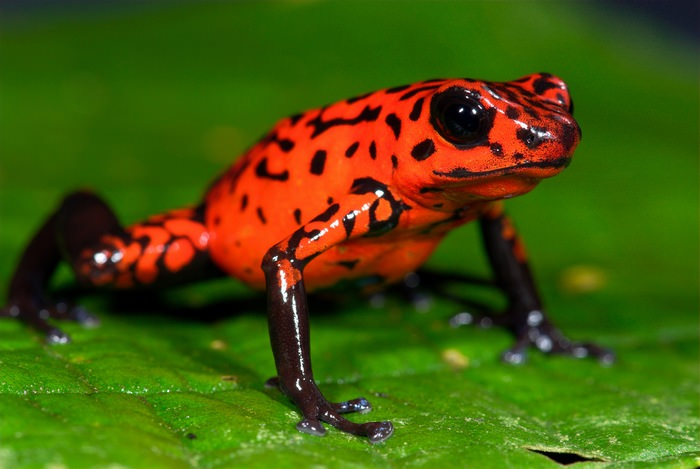 Bonjour mes amis the 10 most poisonous animals in the world for Poisonous fish to eat