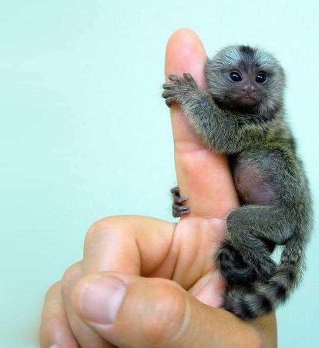 Simple text and average-quality photos combine to introduce a charming newborn African monkey, a red-crowned mangabey. Following the primate throughout the Los Angeles Zoo's specially designed habitat, Hewett photographed Gabbie on stone-wall perches, clipped-grass patches, leafless boughs, and.