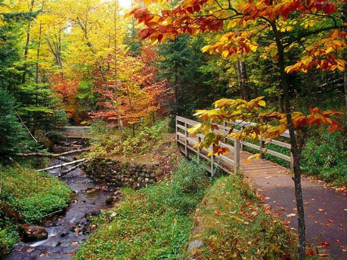 fall in 50 us states