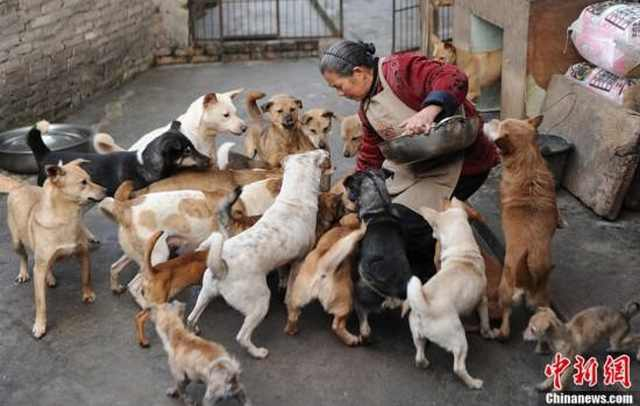 BONJOUR MES AMIS: When Good People Save Animals